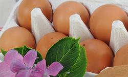 おいしい卵が食べたくて、この卵を作っています